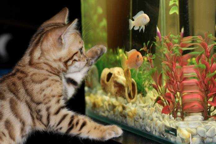 wadah budidaya ikan
