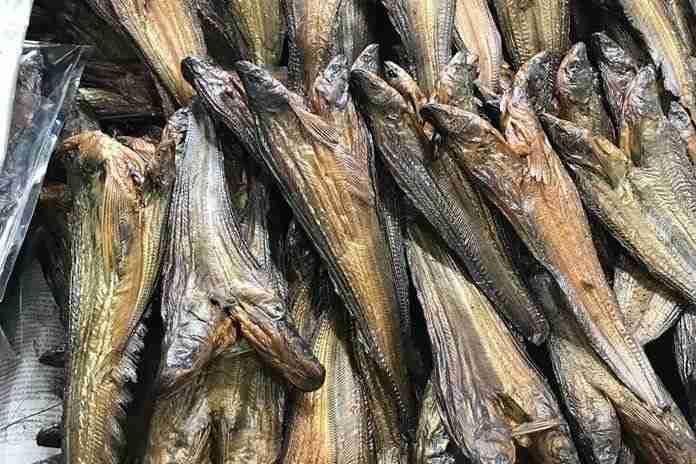 jenis ikan asli Indonesia
