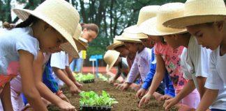 mengenal pertanian sejak dini