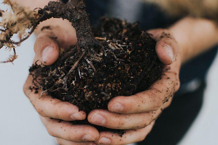 perangsang akar organik
