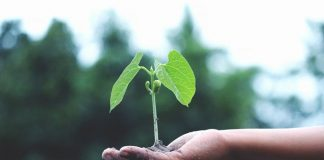 tanaman bisa mendengar lingkungan sekitarnya