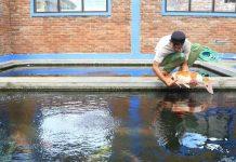 Pembuatan kolam koi