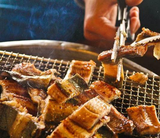 khasiat daging belut
