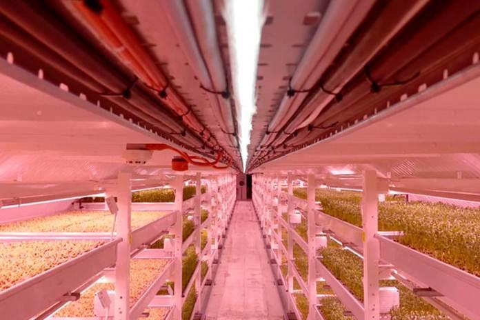 lahan pertanian di bawah tanah