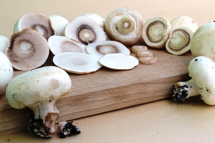 jamur kancing adalah