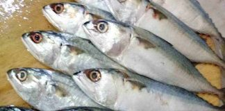 Ikan kembung adalah