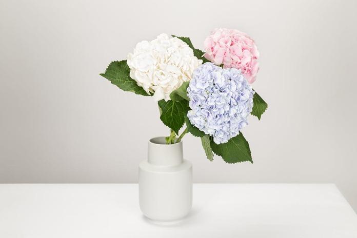 mengurangi layu pada bunga