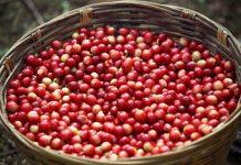 percepatan ekspor komoditas pertanian