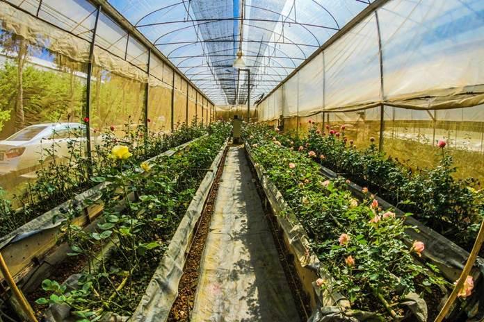 penggunaan plastik pada industri pertanian