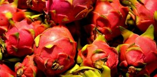 ekspor buah naga ke Cina