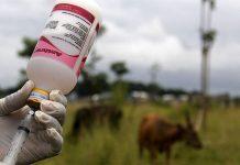 Perlukah vaksinasi pada ternak