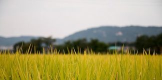 Lahan pertanian di Sukabumi