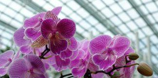 Membuat greenhouse bunga anggrek