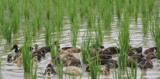 pertanian ramah lingkungan