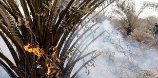 20 hektare lahan kebun sawit di Aceh terbakar
