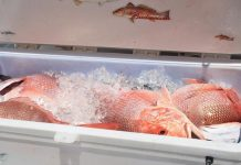 jenis ikan ekspor