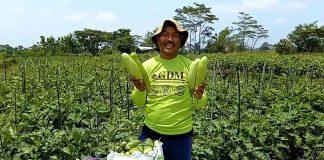 Inovasi Mikroba Dari GDM Organik Untuk Pertanian Organik Indonesia