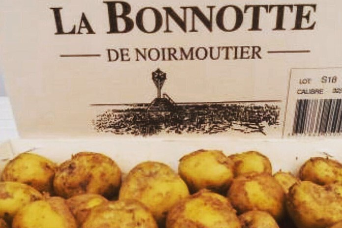 kentang Bonnotte