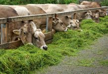bisnis hewan kurban