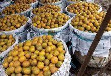 jeruk keprok brastepu