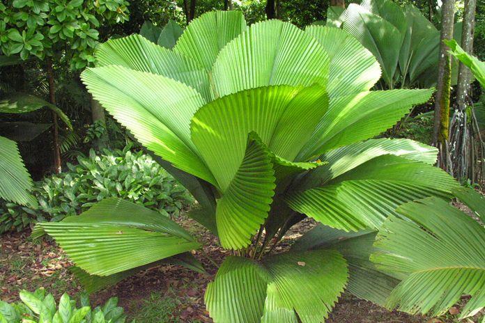 tumbuhan unik dan langka asli Indonesia