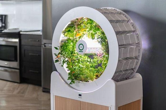 kebun mini modern dalam ruangan