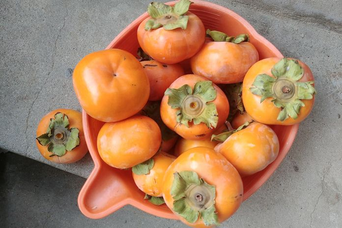 manfaat buah kesemek