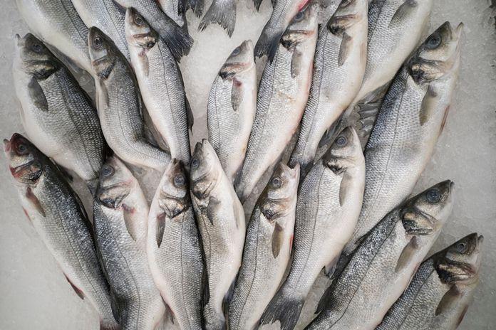Manfaat konsumsi ikan