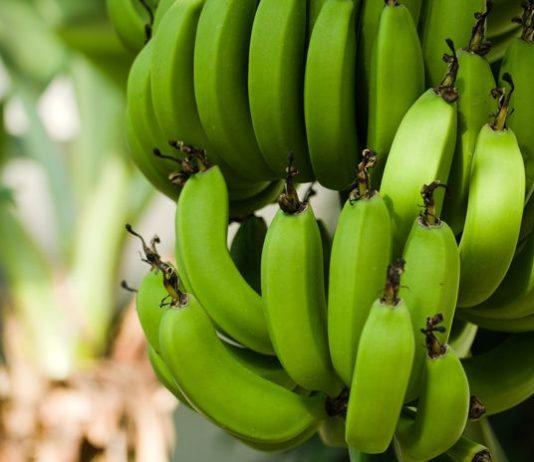 Manfaat makan pisang mentah