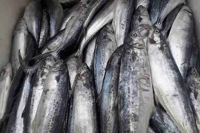 Bau ikan asin