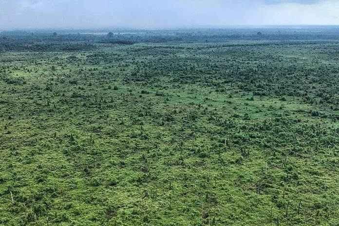 Habitat anggrek alam