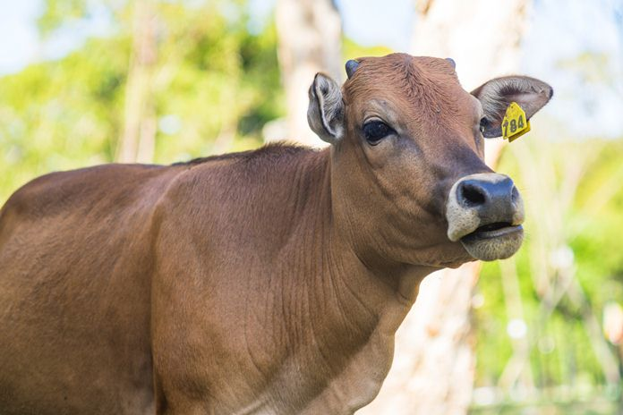 tips investasi hewan ternak untuk kurban