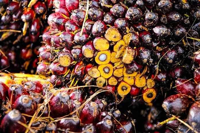 zat hara mikro bagi kelapa sawit