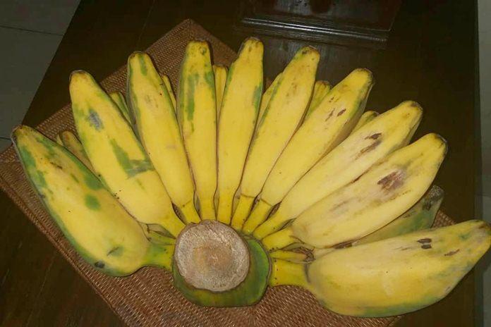 pisang untuk diet