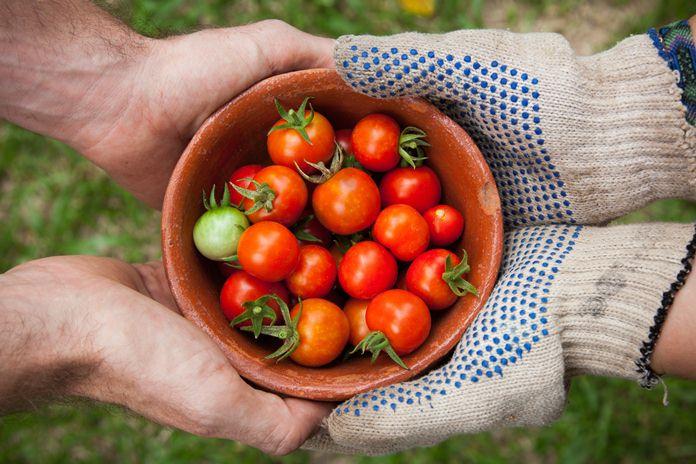 marketplace untuk jual beli produk pertanian