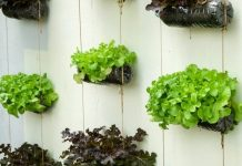 merawat vertical garden