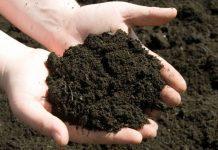 cara pengendalian penyakit tular tanah