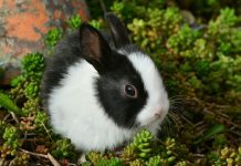 cara merawat kelinci yang benar