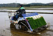 manfaat penggunaan mesin padi modern
