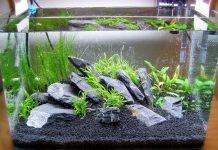 membuat aquascape minimalis