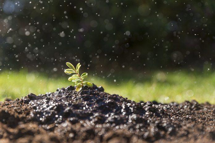 bahan alami untuk menyuburkan tanah