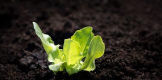 membuat kebun organik mini di rumah