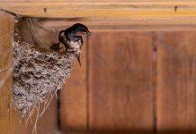 cara menurunkan suhu rumah burung walet