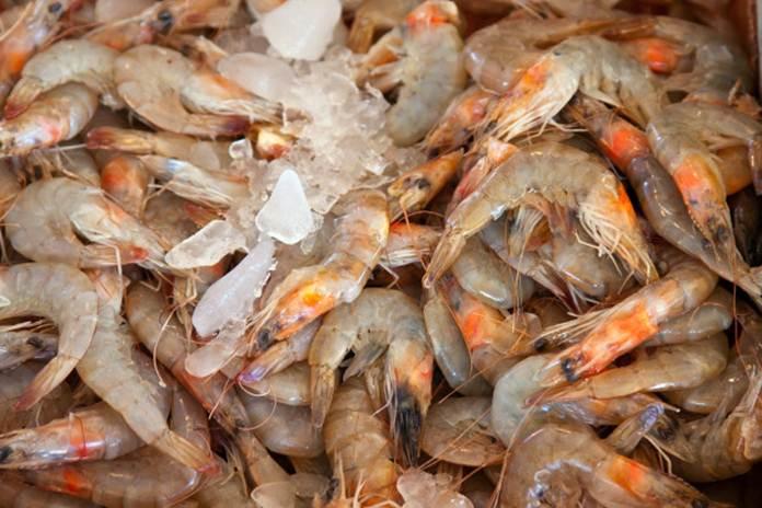 ciri seafood segar