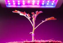 kelebihan penggunaan lampu LED untuk tanaman
