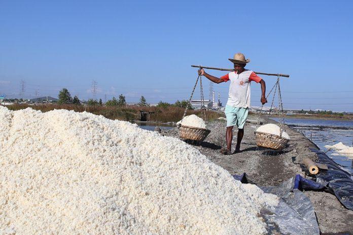 penghasilan petani garam