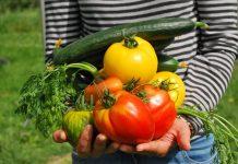 petani milenial yang hasilkan omzet ratusan juta