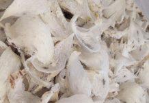 pasar ekspor rempah dan sarang burung walet