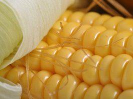 gudang jagung Bulog