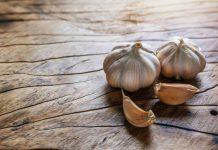 cek benih bawang putih